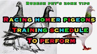homer pigeon training - TH-Clip