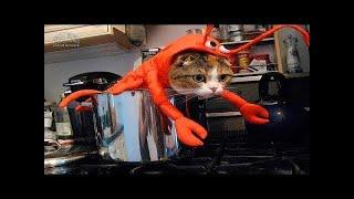 Приколы с кошками и котами #1 Подборка смешных и интересных видео с котиками и кошечками