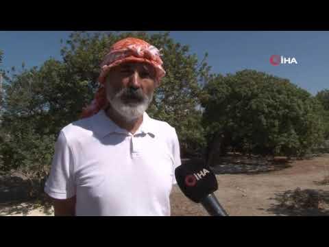 """Türkiye ile Yunanistan'ın """"sakız"""" düellosu"""