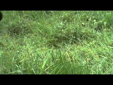 Klassisches Rasenmähen mit Sense oder Sichel GARTENTIPPS