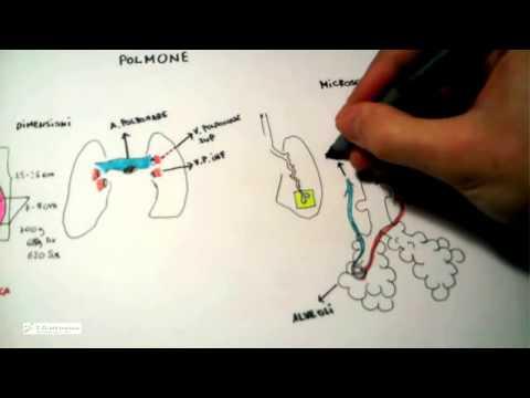 Scoliosis ad adulti di reparto cervicale di una spina dorsale