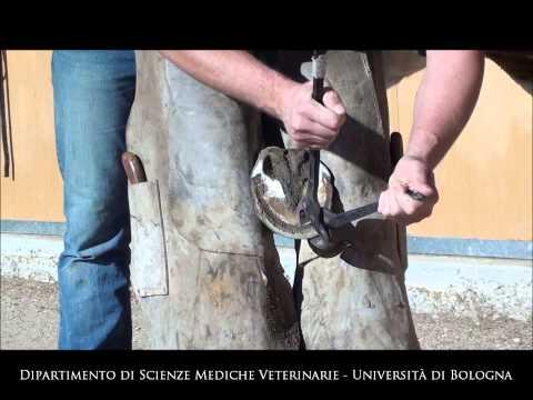 Trattamento di fungo di piede e sintomi