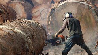 The Risky Life Of Lumberjack World Documentary Films HD Video