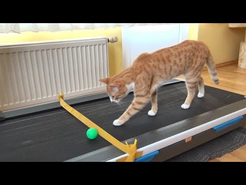 Cat's Reaction to Treadmill !!