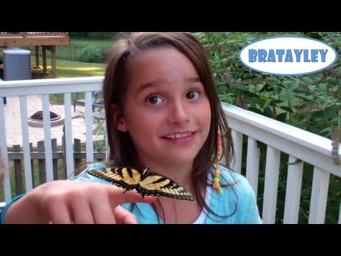 Poisonous Butterflies? (WK 132.4) | Bratayley