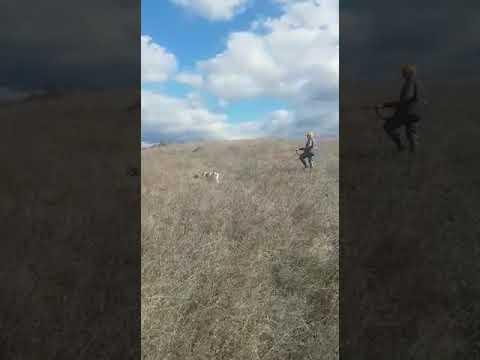 Bıldırıcın Av Videoları 6
