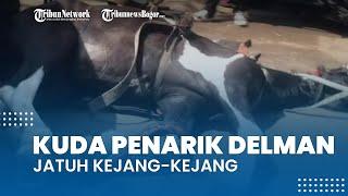Viral Video Kuda Penarik Delman Jatuh di Depan Gerbang Tol Cikupa, Kejang-kejang Diduga Kelelahan