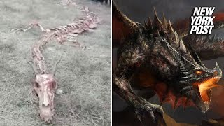 Mysterious dragon skeleton appears in China   New York Post