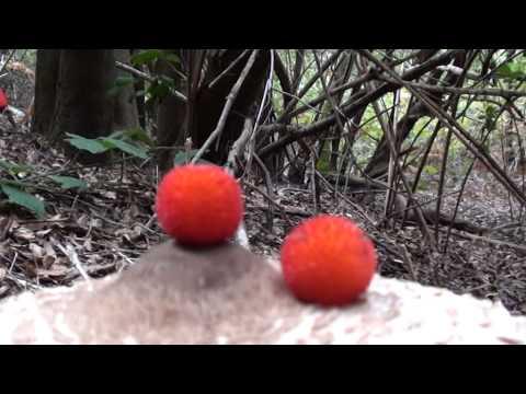 Quale il miglior unguento da un fungo su ununghia