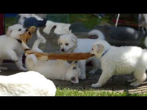 Plüschspielzeug ohne Füllung für Hunde - petcenter.ch