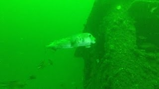 preview picture of video 'Sypo Wreck Dive'