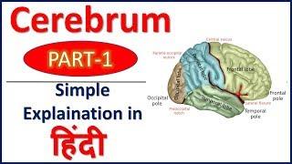 Cerebrum (PART 1) simple explaination in Hindi | Bhushan Science