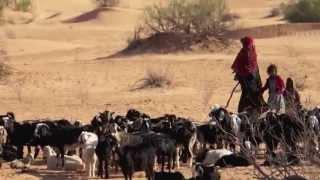 Tunisia Sahara offroad 2014 - Douz, Tembaïn, Jebil National Park,