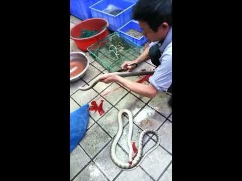 劏蛇師傅一聲就將蛇頭剪去,有如江湖賣藝一樣!