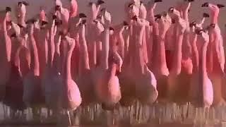 Kürtçe Komik Videolar çok Komik Izle