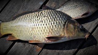 Рыбалка на карпа в ульяновской области