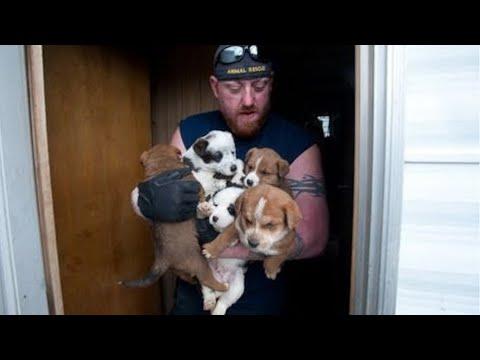 Lieutenant Dan - ADOPTED 8-24-11!, an adopted Australian Cattle Dog / Blue Heeler in Scottsdale, AZ_image-1