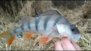 Отчет о рыбалке в подмосковье на оке