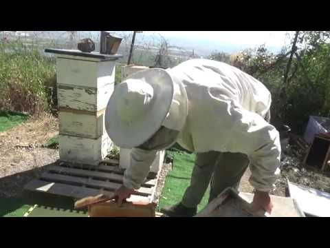 сравнение ,ставлю пчёлоудалители квэбэк и звёздочка