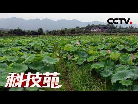 《科技苑》冤家聚头有惊喜 20180919 | CCTV农业