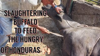 Slaughtering & Butchering a Buffalo in the Jungle w/ Only My Hand Made Knives