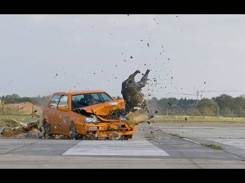 "ADAC-Crashtest: Wildunfälle ""saugefährlich"