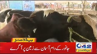 Animals Price Decrease   1am News Headlines   23 Jul 2021   City42