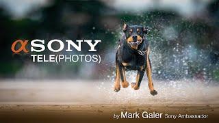 Sony's Best Telephoto Lenses