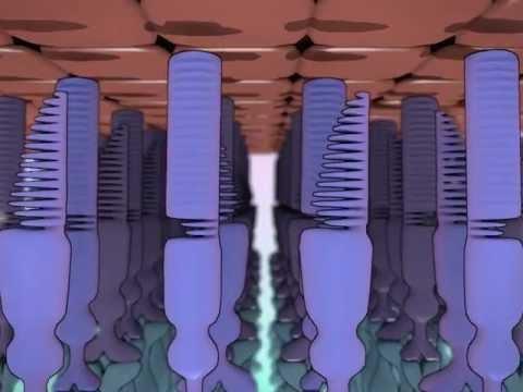 Die Behandlung der Zapfen auf dem Aufstieg des Fusses