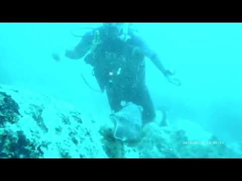 Scuba diving with a cuttle fish!