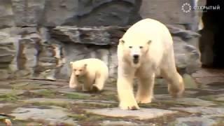 Лучшие видео недели о животных от Рейтер, 17.03.19
