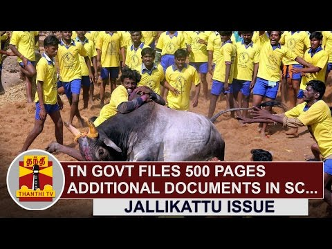 TN-Govt-files-500-Pages-Additional-Documents-on-Jallikattu-Issue-in-SC-Thanthi-TV