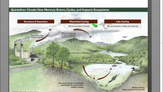 Fire Severity & Ecosystem Impacts Following the Pagami Creek Wildfire