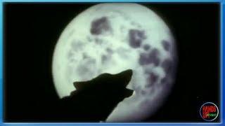 Empyre One & Enerdizer - Moonlight Shadow (Flashback One Video Edit)