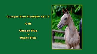Curaçao Blue Picobello A&T Z