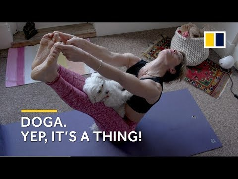 Dog Yoga: New Fitness Craze Doga, Yoga With Your Dog Takes Off In UK