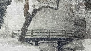 """Peaceful Relaxing Instrumental Music, Beautiful Nature Music """"Snowy Paths"""" by Tim Janis"""