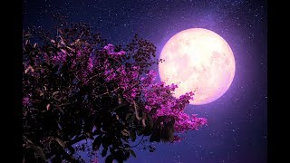 Healing Sleep Patterns   Allowing Deep Sleep ➤ 432Hz Miracle Music   Fall Asleep Fast and Easy