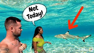 SWIMMING WITH SHARKS 😳