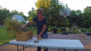 How To Harvest & Cure Hardneck Garlic.
