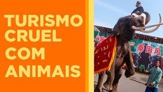 TURISMO CRUEL COM ANIMAIS