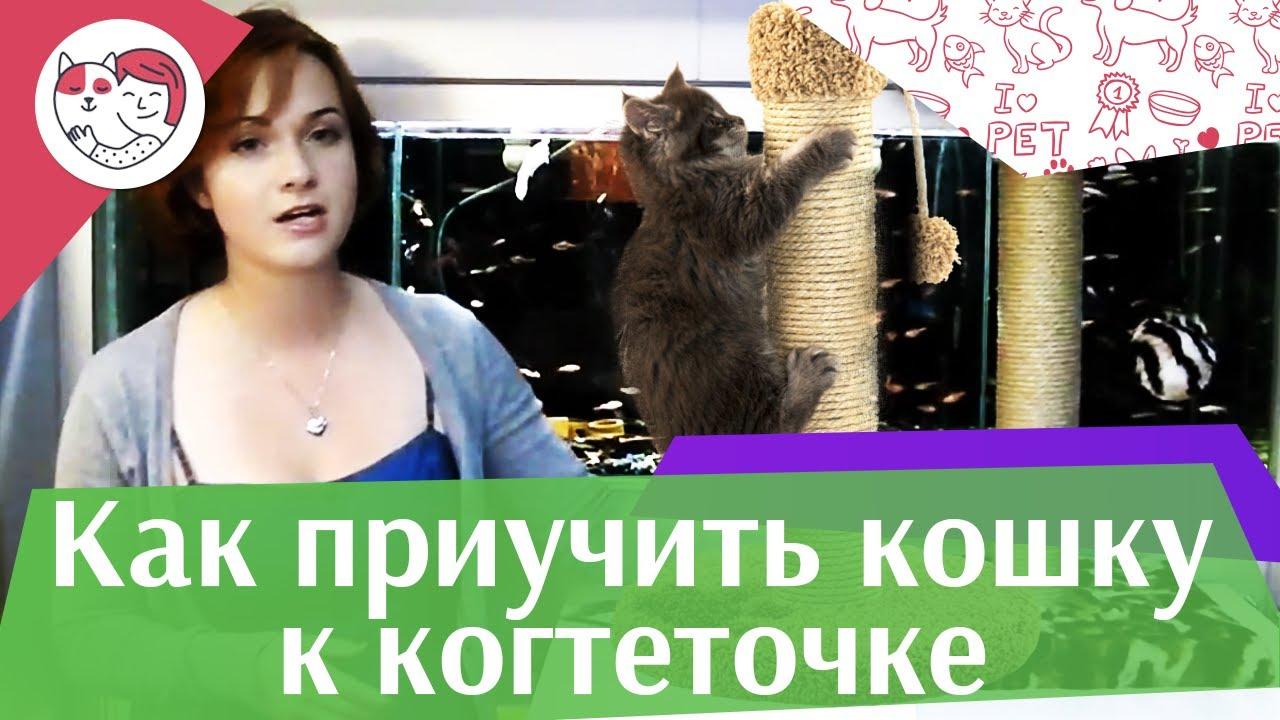 Как приучить кошку к когтеточке на ilikepet