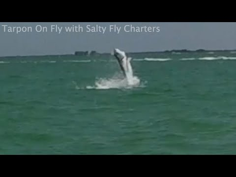 Salty Fly Charters Tarpon On Fly May 2021
