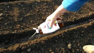 Быстрый способ посадки моркови видео