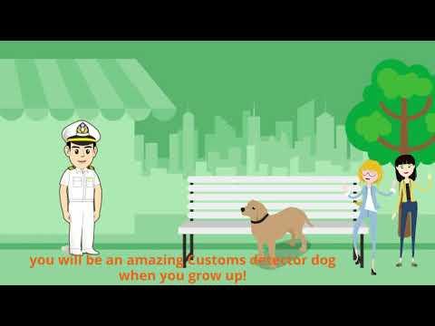 Canine Socialization Training for Taiwan Customs