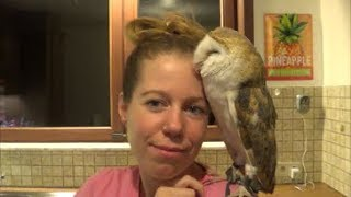 The Affection Of A Barn Owl