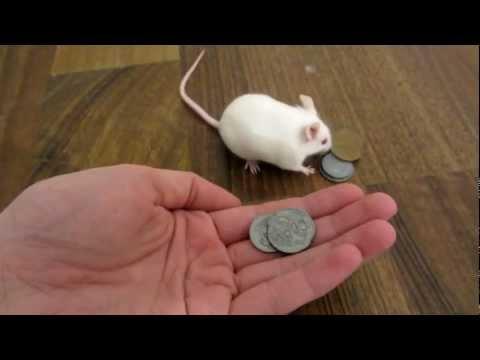 Умная мышка покупает себе удовольствие / видео