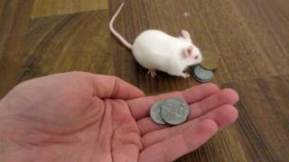 Смотреть онлайн Умная мышь покупает лакомство