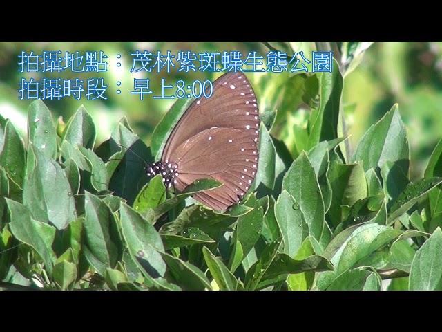 <html> <body> Film for Purple Butterfly2020-1-14 </body> </html>