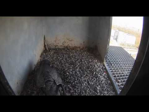 Nest 2: Quick Visit - 09.04.17